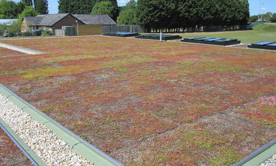 General Asphalte Green Roof