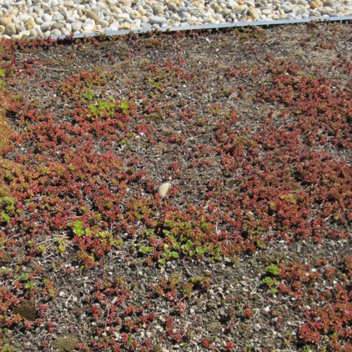 General Asphalte Green Roofs